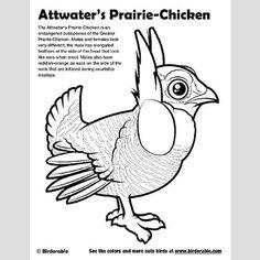 Plan your visit to the Attwater Prairie Chicken National