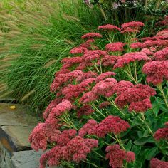 My Favorite Plant Combinations 1