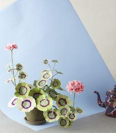 Image of Geranium Plant