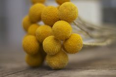 Billy buttons / billy balls / craspedia