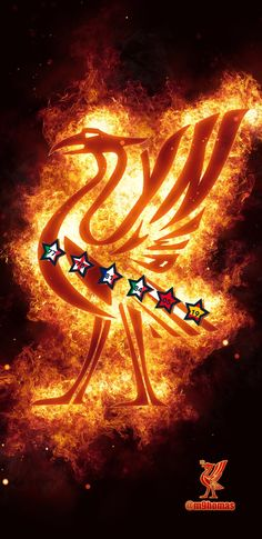 Liverpool Champions, Liverpool Football Club, Liverpool Fc, Liverpool Wallpapers, Neon Signs, Sports, Hs Sports, Sport