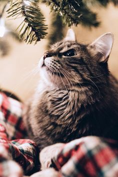 Luca actually refraining from trying to eat the christmas tree. http://ift.tt/2Aqs2LW