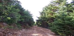 EPIRUS TV NEWS: Χριστουγεννιάτικο Δέντρο: Μπορούμε να το καλλιεργή...