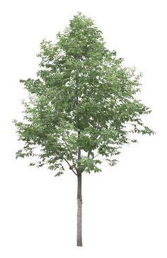 New tree large