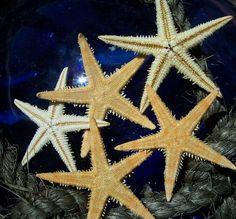... me some starfish