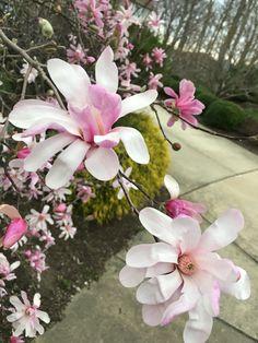 Spring. A photo by Marina
