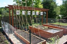 Simple raised bed plot plus an arbor for growing grape vines which conveniently doubles as support for growing upside-down things like ... tomatoes ! (and this year, peppers!)