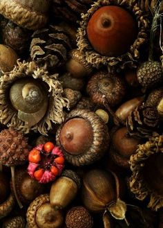 autumn.quenalbertini: Autumn   Ins- piration lane