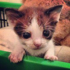 Gattino!!!!!!