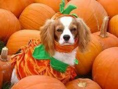 Don't forget about our last Yappy Hour of the year at Carolina Brewery in Pittsboro, Monday from 5:30-7:30pm. Great beer, food, fun, and a costume contest!