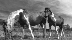 Beautiful horse family, very friendly Ranch Life, Phone Photography, Beautiful Horses, Pictures, Animals, Photos, Animaux, Animales, Animal
