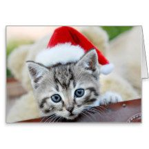 Cute kitten with Christmas hat Greeting Card