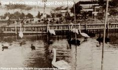 In the 1920s, Basapa move his animals to a 27-acre of land he bought at Punggol. His new zoo was considered modern then, equipped with power generators and had workers' dormitories. However, the zoo was destroyed before the Japanese invasion. Identifying the Punggol end as a potential landing site for the Japanese invaders, the British forces evicted the zoo and used the location as a defensive ground. (Text modified from source http://bit.ly/GElaqE)