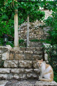 Albania, Berat. Kot