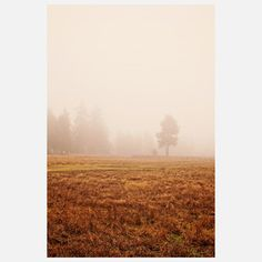 Morning Fog Park, $21, now featured on Fab.