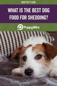 What is the best dog food for shedding? This article covers the top 5 dog food picks to help reduce excessive shedding in your dog. Best Dog Food, Best Dogs, Food Picks, Dog Shedding, Dog Food Recipes, Your Dog, Good Things, Top, Animals