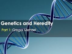 Dna gene protein relationship an analogy students and school genetics mendel heredity punnett squares dna proteins malvernweather Gallery