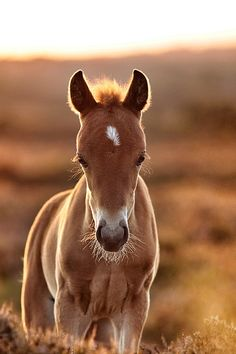 Re-pin if this baby made you smile!  Golden foal by Lee Crawley