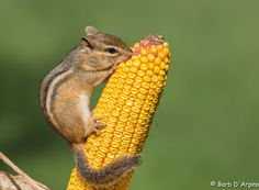 Harvesting by Barb D'Arpino on 500px
