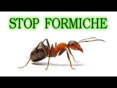 Stop alle formiche per sempre, in modo naturale e a costo zero ( o quasi) - YouTube Plant Care, House Plants, Insects, The Cure, Youtube, Smartphone, Gardening, Diy, Medicine