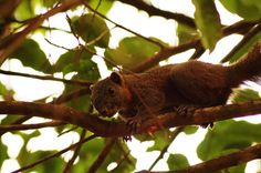 Little squirrel in The trees'