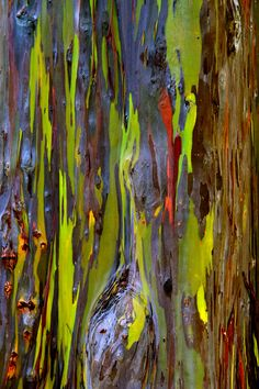 Tree Bark Best Abstract Paintings, Abstract Art, Visual Texture, Texture Art, Patterns In Nature, Textures Patterns, Tree Bark, Tree Tree, Rainbow Eucalyptus Tree