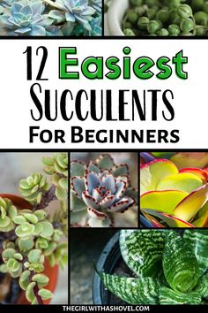 Do you love succulents, but struggle to keep them alive? Here's an awesome list of the 12 easiest succulents to grow indoors! #succulenthappy #succulentadvice | Easy Succulents to Grow | Easy Indoor Succulents | Succulents that are Easy to Grow | Succulent Care |