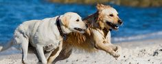 Just like humans, dogs love summer. Check out 5 summer dog videos of dogs swimming, splashing, running and even getting dirty.