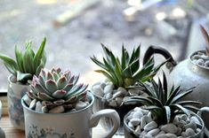 I may yet do this with my old mugs. One way to reuse them without having to pay for new, matching pots!