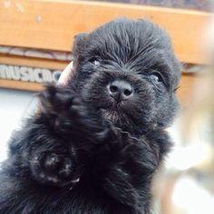 My cutest black puppy in the world..