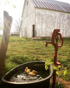 Country Barns, Old Barns, Country Life, Country Living, Country Roads, Country Charm, Esprit Country, Zone Rurale, Future Farms