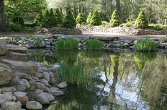 A large water garden with stacked stones around the edges and thick tufts of plants growing in patches around the outside, wherever they can get a foothold. This pond is quite a bit larger and deeper than other ponds in this collection.