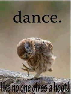 Cute dance style....by a baby owl.