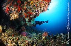 FORGOTTEN ISLANDS: What is the new best diving site in the world