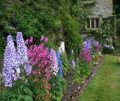 Cottage garden border full of delphiniums