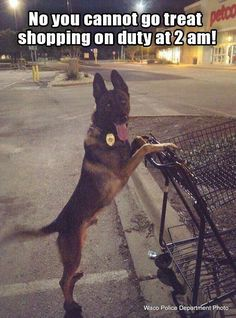Omg that is so adorable  #dogs #dpgys #dogysmag