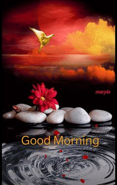 Good Morning Pictures, Images, Photos - Page 2 Good Morning Dear Friend, Good Morning Roses, Cute Good Morning, Good Morning Picture, Good Morning Messages, Good Night Image, Good Morning Wishes Friends, Good Morning Beautiful Pictures, Latest Good Morning Images