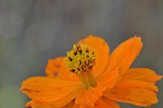 The same Orange flower by Claudia Crempien - PhotoBlog