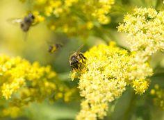 Honey Bees, Bee Happy, Beekeeping, Getting Wet, Tattoo Ideas, Dance, Amazing, Nature, Plants
