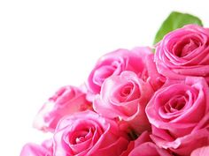 Gambar Bunga Mawar Pink yang Banyak