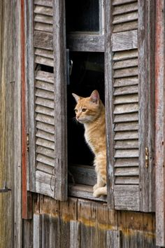 my yellow cat (similar looking to this one) suddenly died today. I cry for you, O'Malley Orange Cats, Yellow Cat, Red Cat, Cat Window, Gatos Cats, Photo Chat, Lots Of Cats, Cat Boarding, Ginger Cats