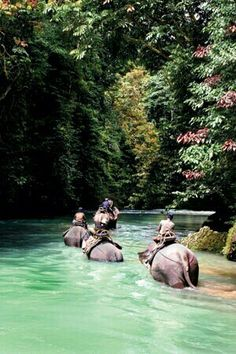 """India - Elephant trekking in Tangkahan """"the hidden paradise"""" of North Sumatra Places Around The World, Oh The Places You'll Go, Places To Travel, Travel Destinations, Places To Visit, Elephant Trekking, Elephant Ride, Bali Elephant, Dream Vacations"""