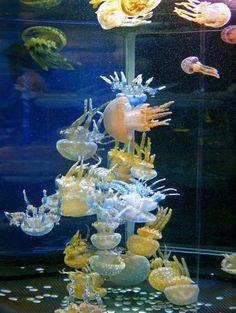 クラゲ2000匹 楽しく涼しげ : 日本経済新聞