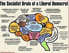 The Socialist Brain of a Liberal Democrat. All other Democrats barely have a brain. Liberal Democrats, Liberal Logic, Socialism, Politicians, Communism, Other People's Money, Conservative Politics, Republican Party