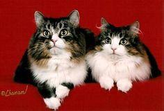 Kashi Saga - Norwegian Forest Cat Breeder New Jersey, USA - Tribute to Pirate