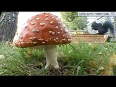 Wow! Fungi plant growth - The Private Life of Plants - David Attenborough - BBC wildlife - YouTube