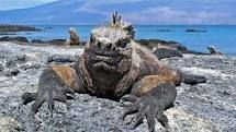 gotta do the Darwin thing and see what he saw in the Galapagos!!..