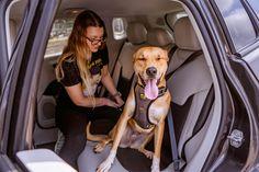 Magnum Opus, Dog Safety, Dog Car, Dog Travel, Medium Dogs, Dog Harness, Small Dogs, Your Dog, Animals