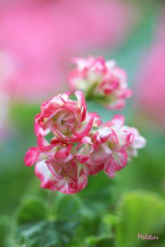 Pink wind