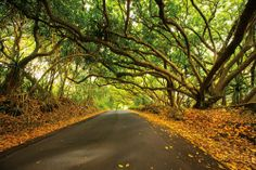 red_cinder_road_big_island_hawaii